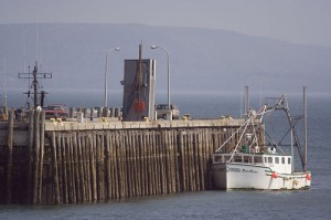 A Digby fishing boat at low tide.