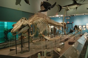 Natural History Museum in Halifax