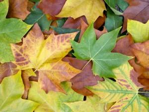 Fall colours fade in November