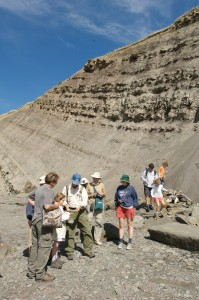 Touring the fossil cliffs of Joggins